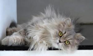 Pelo Gatto Consigli Bestiali Collezione i Cuccioli