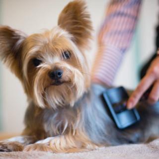 Il pelo Consigli Bestiali Collezione i Cuccioli