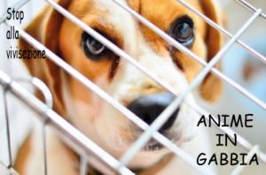 Anime in gabbia | stop vivisezione | Collezione i Cuccioli