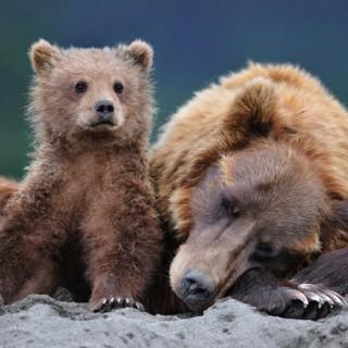 Daniza orsa, Collezione i Cuccioli