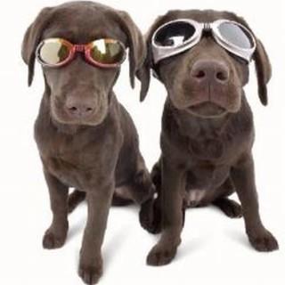 Disturbi agli occhi pelosi | Consigli Bestiali | Collezione i Cuccioli