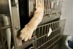 Stop vivisezione|Collezione i Cuccioli