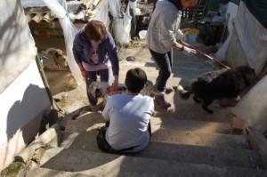 Rocca degli Angeli, Collezione i Cuccioli