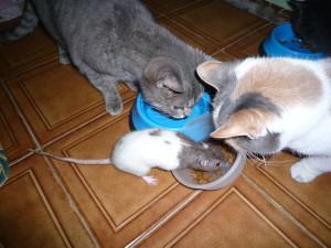 Domino, sperimentazione animale, Collezione i Cuccioli