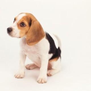 Anti Vivisezione Collezione i Cuccioli